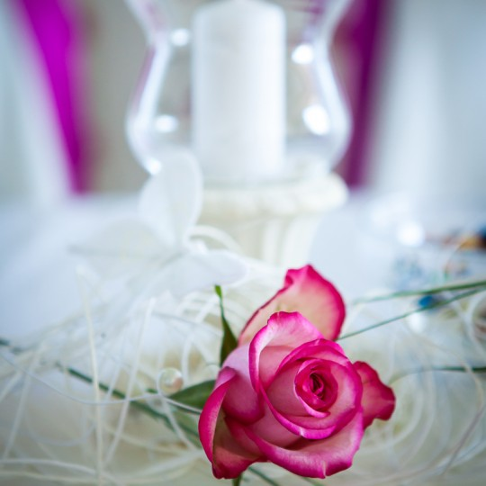 Tischdeko Gerbara Pink (2)